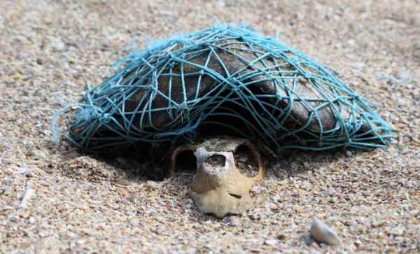 ハワイウミガメプラスチック