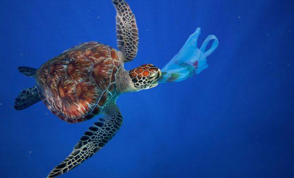 海洋プラスチック被害